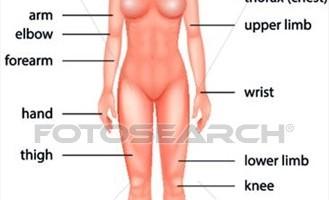 محادثة حول اجزاء الجسم باللغة الانجليزية