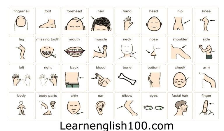 اسماء اعضاء الجسم بالانجليزي والعربي بالصور و مترجم