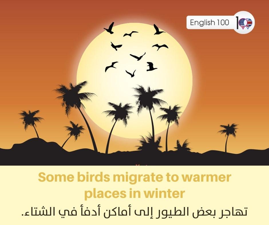 معنى كلمة شتاء بالانجليزي Meaning of winter in English