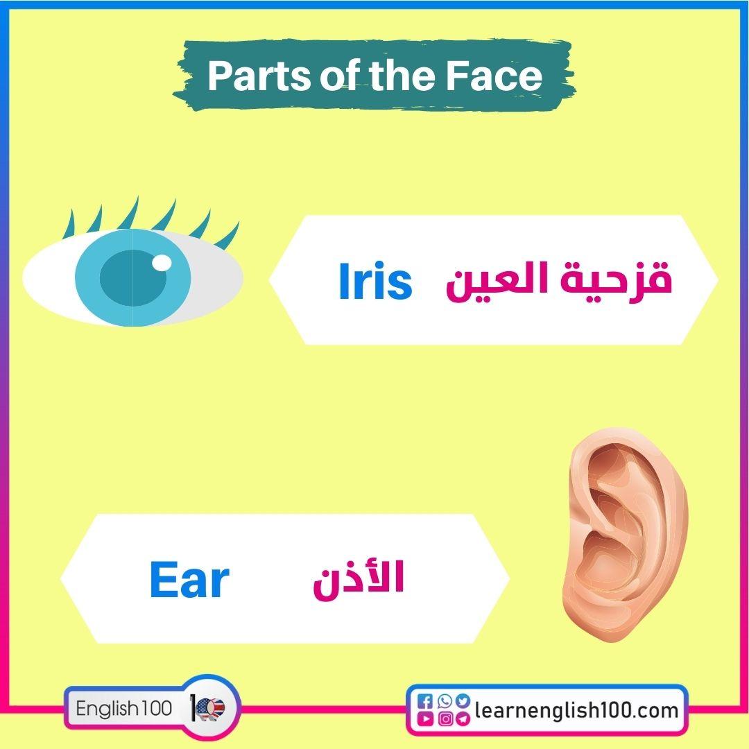 Iris قزحية العين / Earالأذن
