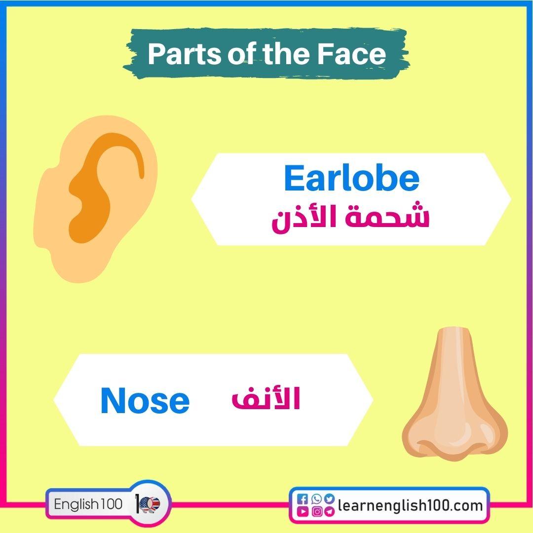 Earlobe شحمة الأذن / Noseالأنف