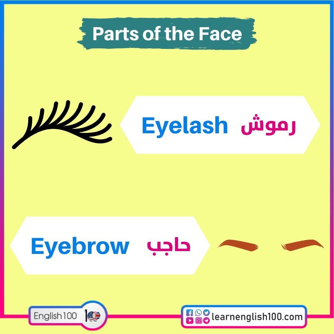 Eyelashرموش / Eyebrowحاجب