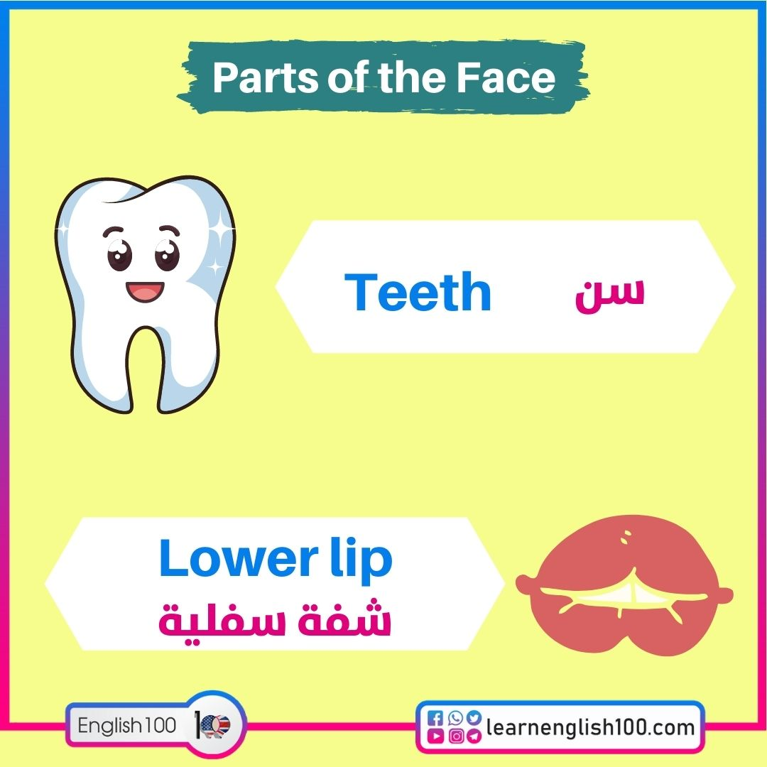 Tooth سن / teeth أسنان / Lower lip شفة سفلية