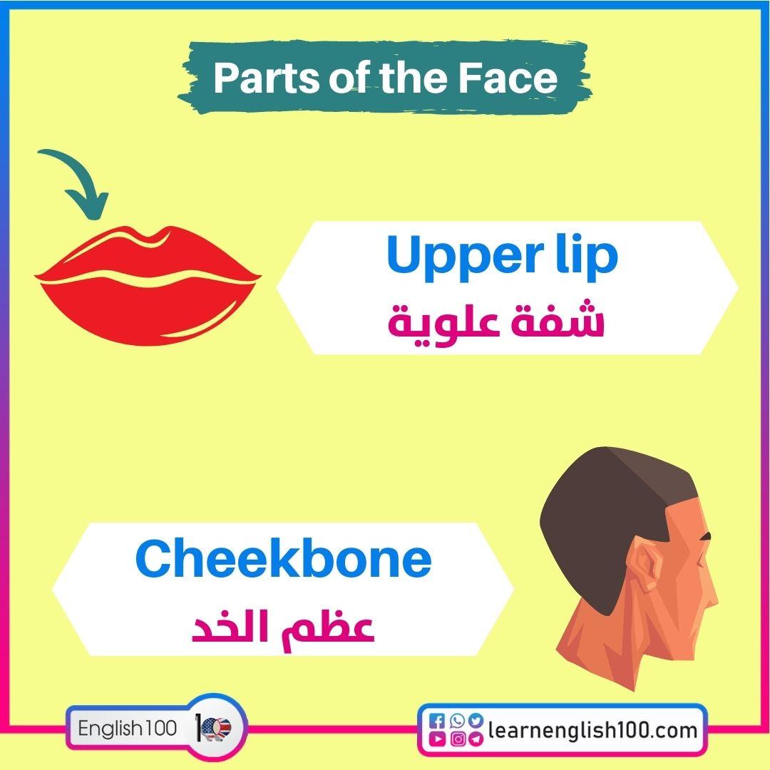 Upper lip شفة علوية / Cheekboneعظم الخد